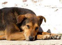 В Тюмени откроют памятник бездомной собаке