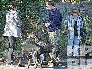 Выгуливать собак теперь нельзя во дворах, на пляжах, в парках... Нигде! (Воронеж)