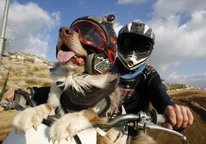 Собака-мотогонщик