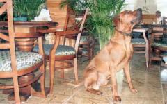 В ресторан – с собакой (Литва)
