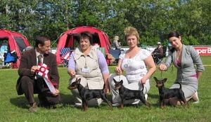Собаки из Калининграда выиграли на дог-шоу в Дании