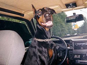 У домашних животных в Челябинске теперь будет своё такси