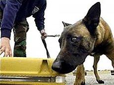 В Волгограде собираются поставить памятник собаке