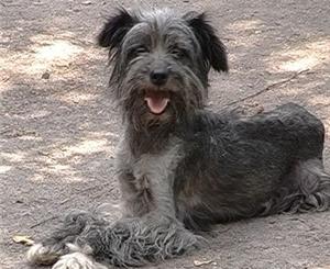 Из-за нехватки денег на донецкие улицы выпустят 600 бездомных собак (Украина)