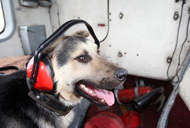 В Егорьевске даже собаки летают (Московская область)