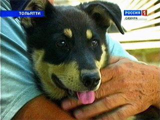 Ровно год в Тольятти работает приют для бездомных животных