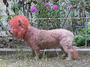 Петербуржцы повели котов и собак к парикмахерам
