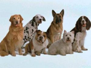 Немцы ежегодно расходуют на покупку собак и их содержание более 5 млрд. евро