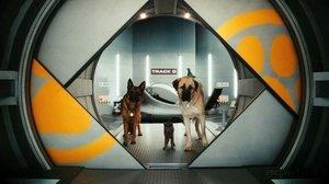 Фото кошек и собак в обмен на билеты в кино
