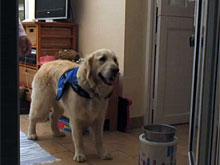 Собаки могут чувствуют приступы эпилепсии