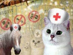 Животные помогают в борьбе с ВИЧ