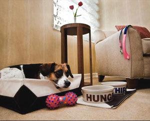 Фешенебельный нью-йоркский отель разработал программу для собак