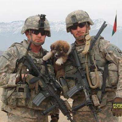 Три собаки, жившие на военной базе США в Афганистане, помешали террористу-смертнику взорвать барак