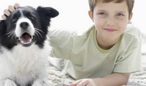Собаки копируют поведение хозяев