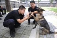 29 полицейских собак погибли из-за передозировки глистогонных препаратов
