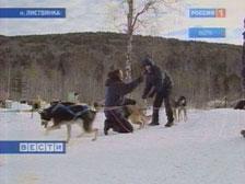 """""""По следам Великого чайного пути"""" отправятся на собачьих упряжках"""