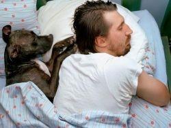 Собаки лечат от бессонницы
