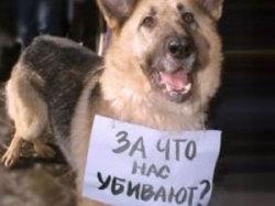 Защитники бездомных животных проведут флеш-моб (Екатеринбург)
