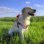 Love My Pets представляет новые персонализированные GPS-ошейники