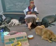 В Харькове хозяева выбрасывают на улицу бойцовских собак