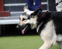 В Тюмени определили лучших служебных собак МВД России