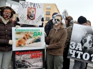 Московский священник выступил против уничтожения бездомных животных