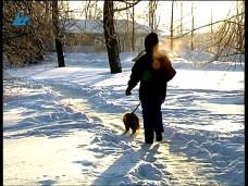 В Петрозаводске еще один хозяин привязал пса к дереву и оставил на морозе