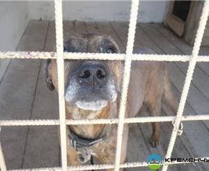 В Киеве снова травят собак