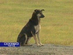 Собака на трассе Чита - Иркутск больше месяца ждёт хозяина