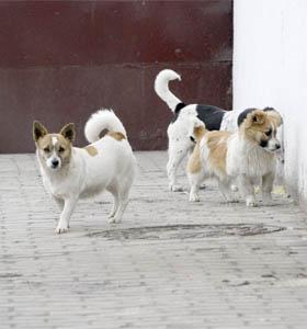 В Минске строят первую гостиницу для животных