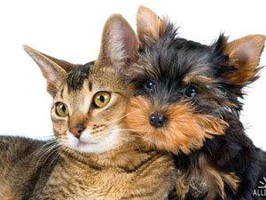 Собаки и кошки в жизни семьи