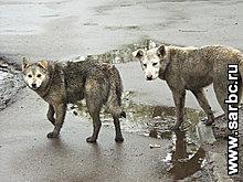 Готовится фестиваль домашних животных (Саратовская область)