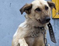 Приёмники для собачьих «сюрпризов» расширяют географию (Москва)