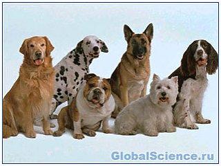 Разнообразие пород собак обусловлено всего несколькими генами