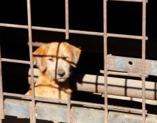Из подвала достали собаку, ни разу не выходившую на улицу (Чита)