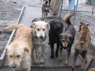 Защитники животных предлагают тюменцам посчитать бездомных собак