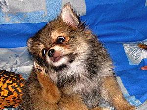 Собаки и кошки мучаются из-за аллергии (Кубань)