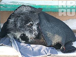 Суд обязал власти создать приют для бездомных животных (Алтайский край)
