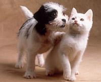 В Самаре в 1,5 раза уменьшилось число людей, имеющих домашних животных