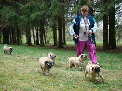 Собаководы подготовят свои поправки в новый закон (Томская область)