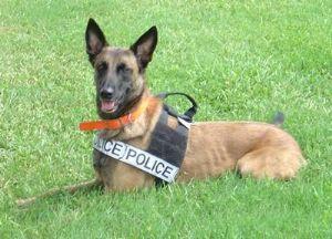 Новые собачки для полиции выведены в канадской провинции Манитоба