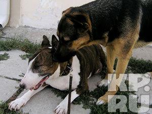 В Мурманской области нашли новый метод решения проблемы безнадзорных собак