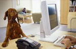 Исследователи рекомендуют заводить собак в офисах компаний