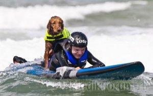 Детей-инвалидов учит серфингу собака