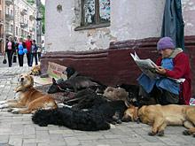Москвичам запретят выгуливать больше двух собак одновременно