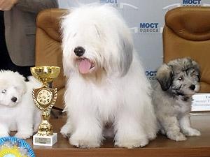 Выведенную в Одессе породу собак признали лучшей
