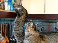 Московские власти намерены провести перепись кошек и собак
