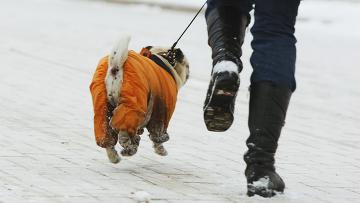 Приставы арестовали собачий гардероб у должников из Петербурга