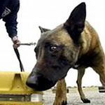 В Ростове появилась «спортплощадка для собак»