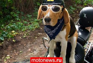 Пес-байкер из России